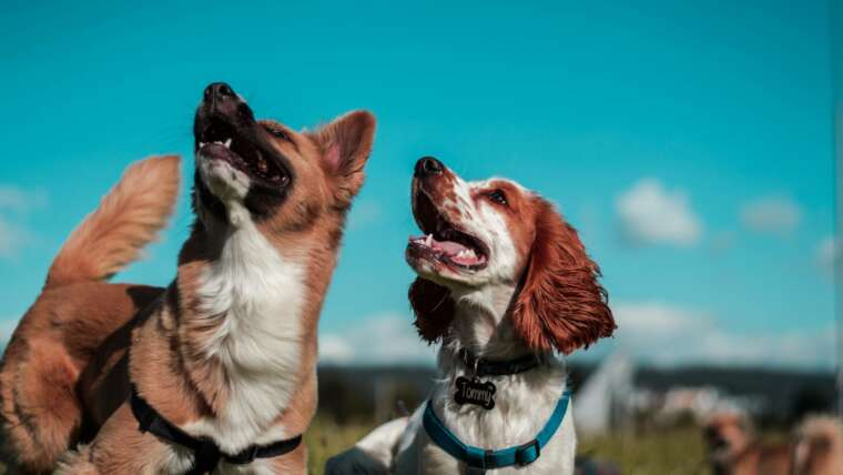 A Dog has Bit You at Work: Dog Bites and Worker's Compensation